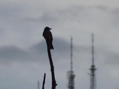 Meu pássaro cantor