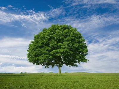 Árvore-vida