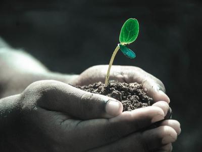 Três valiosas sementes de vida