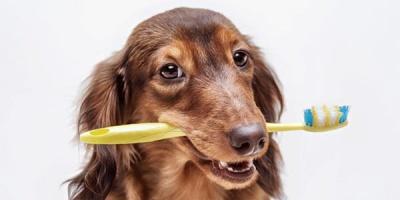 Você escova osdentesdo seu cão?