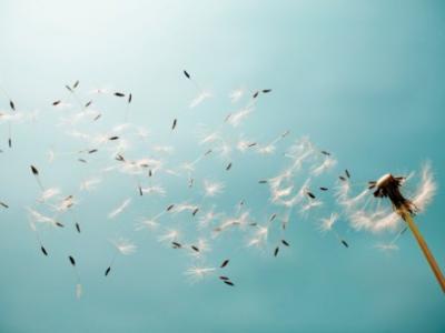 Por um ninho que cai... ventos, ventanias, chuvas...